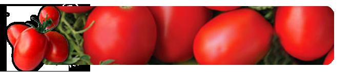 jitomate saladette premier horticultura